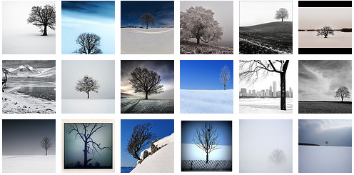Lone tree in winter
